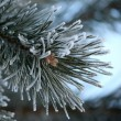 Twig of pine hoar-frost covered, soft focus — Stock Photo