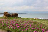 Pink garden by the sea — Stok fotoğraf