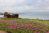 Roze tuin door de zee — Stockfoto
