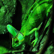 Cameleon — Stock Photo