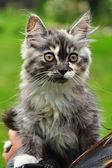 Katze kätzchen — Stockfoto