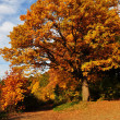 Golden Polish Autumn — Stock Photo