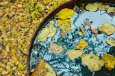 Fallen yellow leaves on the blue water in vintage metal bowl — Stock Photo