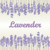 Lavender card — Stock Photo