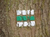 Tourist signposting on the bark of a tree — Stock Photo