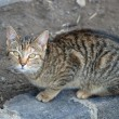 Young tabby cat — Stock Photo #25534317