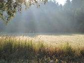 View on a sunny summer meadow — Stock Photo