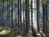 Uitzicht over het boslandschap — Stockfoto