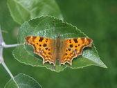Bella farfalla su una foglia — Foto Stock