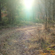 Stock Photo: Sunny forest road, south Bohemia