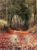 Ingresso foresta — Foto Stock