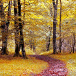 Path in colorful forest in autumn - Foto de Stock