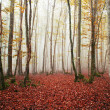 Stock Photo: Beautiful beech forest with fog