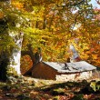Cabin in autumn forest — Stock Photo #22187931