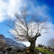 Stock Photo: Dead tree silhouette against blue sky