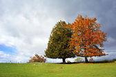 Um par de evergreen e deciduous as árvores no outono — Fotografia Stock