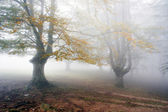 Mysterious and foggy forest — Stock Photo
