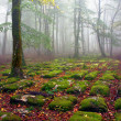 Stock Photo: Path of sedimentary rocks in foggy beech forest