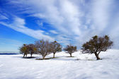Trees in snow with blue sky — Stock Photo