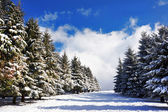 Corridor in the snow surrounding with pines — Stock Photo