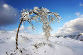 Frozen bush with blue sky — Stock Photo