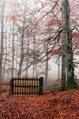 Gate closed in autumn forest — Stock Photo