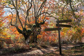 Signpost in autumn forest — Stock Photo