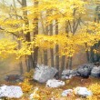 Forest in autumn with fog and some rocks with vivid yellow color — Stock Photo