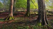 Rötterna av vissa träd med vackra ljus — Stockfoto