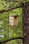 Birdhouse hanging on a tree — Stock Photo
