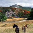 Beautiful house in the mountain with horses — Stock Photo #26308061