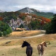 Stock Photo: Beautiful house in the mountain with horses