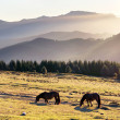 Horses in the mountain with haze at morning — Stock Photo