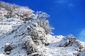 Frozen trees on mountain against blue sky — Stock Photo