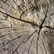 Stock Photo: Circles on bark of tree cutted