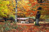 House in autumn forest — Stock Photo