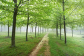 Trail in the forest with rain — Stock Photo