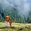 Colt horse grazing in mountain — Stock Photo