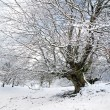 Winter landscape with tree and frozen branches — Stock Photo #32660377