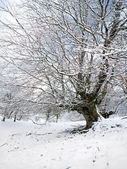Winter landscape with tree and frozen branches — Stock Photo