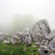 Boulder and big rocks in foggy forest — Stock Photo