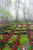 Sedimentary rocks in foggy forest — Stock Photo
