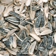 Sunflower seeds with shell scours — Stock Photo