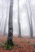 Buk długich pni jesień — Zdjęcie stockowe
