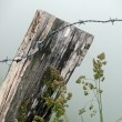 Barbed wire on wooden fence — Stock Photo