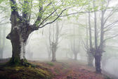 Forest with fog and footpath — Stock Photo