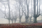 Mysterious forest with fog — Stock Photo