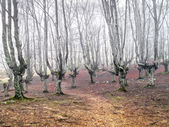 Gloomy forest with scary trees — Stock Photo