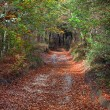 Trail in forest with leaves on the ground — Stock Photo