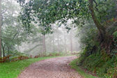 Path in forest with rain and fog — Stock Photo